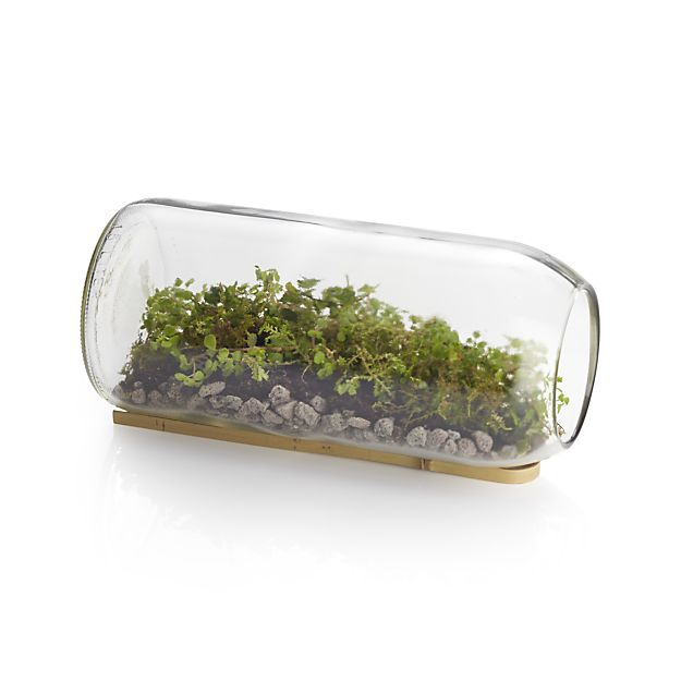 moss-and-sedum-terrarium